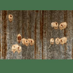 TWENTY SPARROWS ON WIRES